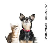 cute young cat and dog looking... | Shutterstock . vector #1018223764