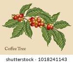 coffee tree elements  retro...   Shutterstock .eps vector #1018241143