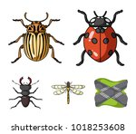 insect  bug  beetle  paw ... | Shutterstock .eps vector #1018253608