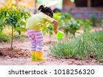 asian kid watering to vegetable ... | Shutterstock . vector #1018256320