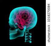 skull x ray with heart flower... | Shutterstock .eps vector #1018270084