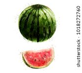 watermelon on white background. ... | Shutterstock . vector #1018272760