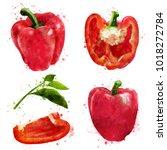 pepper on white background.... | Shutterstock . vector #1018272784