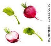 radish on white background.... | Shutterstock . vector #1018272790