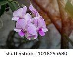 beautiful purple flowers in the ... | Shutterstock . vector #1018295680