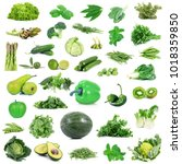 global green gastronomy collage ... | Shutterstock . vector #1018359850