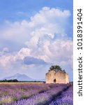 lavender fields in provence  ...   Shutterstock . vector #1018391404