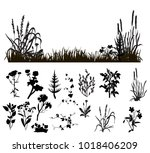 isolated silhouette of grass... | Shutterstock . vector #1018406209