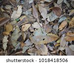 dry leave texture fall in... | Shutterstock . vector #1018418506
