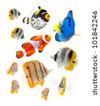 reef fish  marine fish isolated ... | Shutterstock . vector #101842246