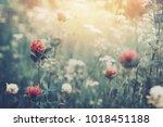 beautiful spring summer... | Shutterstock . vector #1018451188