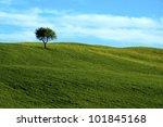 Lone Tree  Field  Hill  Tuscan...
