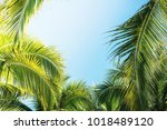 coconut palm tree with blue sky ... | Shutterstock . vector #1018489120