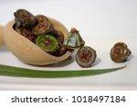 gumnuts   fruit of the... | Shutterstock . vector #1018497184