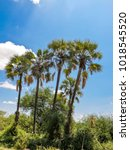 Small photo of palm tree with bird agapornis tanagire park