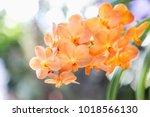 orchid flower in garden at... | Shutterstock . vector #1018566130