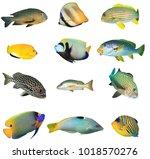 Collection Fish Cutouts....
