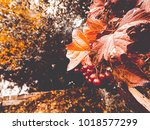 berries of mountain ash with... | Shutterstock . vector #1018577299