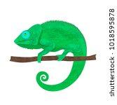 flat trendy design chameleon .... | Shutterstock .eps vector #1018595878
