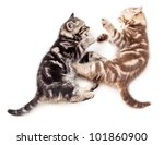 Stock photo two kittens playing together 101860900