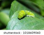 big worm image | Shutterstock . vector #1018609060