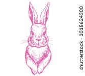 bunny cute rabbit animal ink... | Shutterstock .eps vector #1018624300