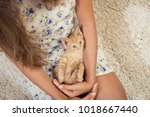 Stock photo girl with a favorite kitten young girl is holding a red kitten cute kitten little red cat on 1018667440