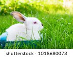 white rabbit in blue wattled... | Shutterstock . vector #1018680073