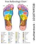 foot reflexology. alternative... | Shutterstock .eps vector #1018749538