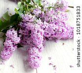 fresh flowers of lilac on a... | Shutterstock . vector #1018751833