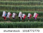 labourers carry bricks from...