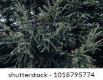 close up texture background... | Shutterstock . vector #1018795774