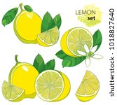 vector set with outline half... | Shutterstock .eps vector #1018827640
