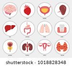 different flat human organs set ... | Shutterstock .eps vector #1018828348