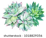 composition of succulents ... | Shutterstock . vector #1018829356