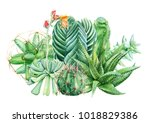 composition of succulents ... | Shutterstock . vector #1018829386