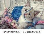 Stock photo sweet bengal kitten 1018850416