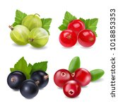 realistic berries set with... | Shutterstock .eps vector #1018853353