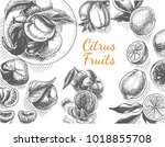 vector sketch background fruit. ... | Shutterstock .eps vector #1018855708