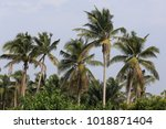 view of several groups of... | Shutterstock . vector #1018871404
