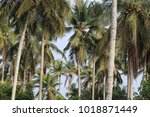 view of several groups of... | Shutterstock . vector #1018871449