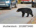 horizontal shot of a black... | Shutterstock . vector #1018873480