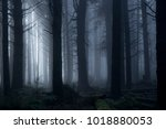 light passing through the trees ... | Shutterstock . vector #1018880053