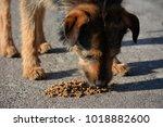 red  shaggy  adult  homeless...   Shutterstock . vector #1018882600