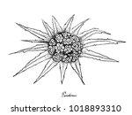 tropical fruit  illustration... | Shutterstock .eps vector #1018893310