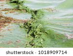 algal blooms caused by the...   Shutterstock . vector #1018909714