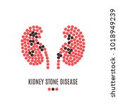 kidney stone disease awareness... | Shutterstock .eps vector #1018949239
