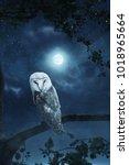 awakening owl sitting on tree... | Shutterstock . vector #1018965664