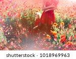 flowers in meadow  red poppy...   Shutterstock . vector #1018969963