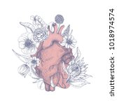 gorgeous anatomical heart... | Shutterstock .eps vector #1018974574